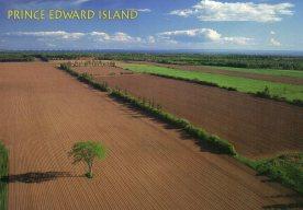 Potato fields in Lower Bedeque